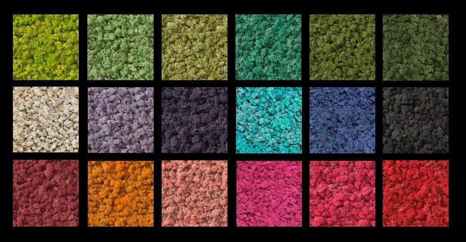 Colores_NaturalMoss