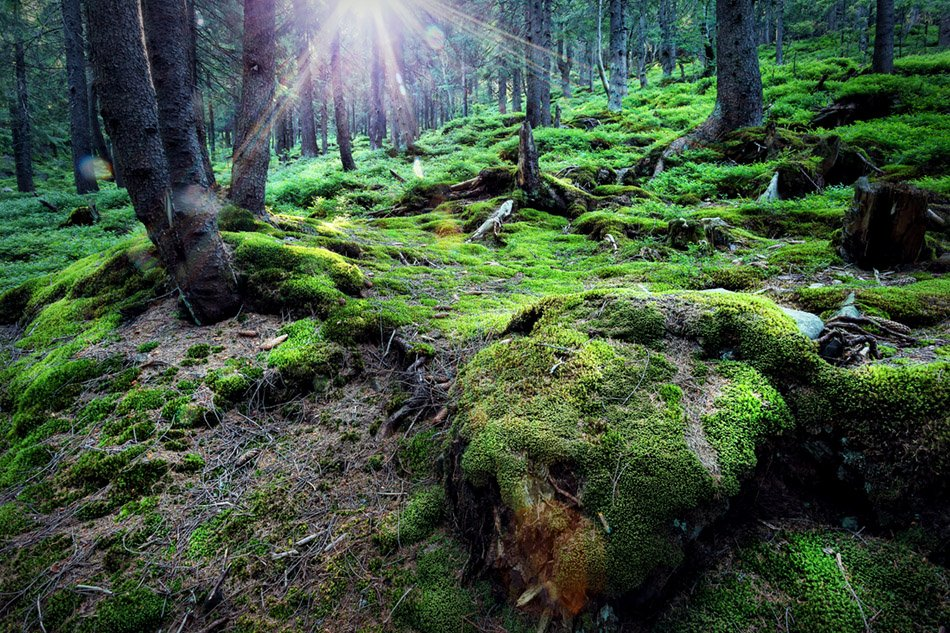 Mysterious forest under the bright sun